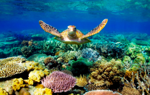 greatbarrier reef